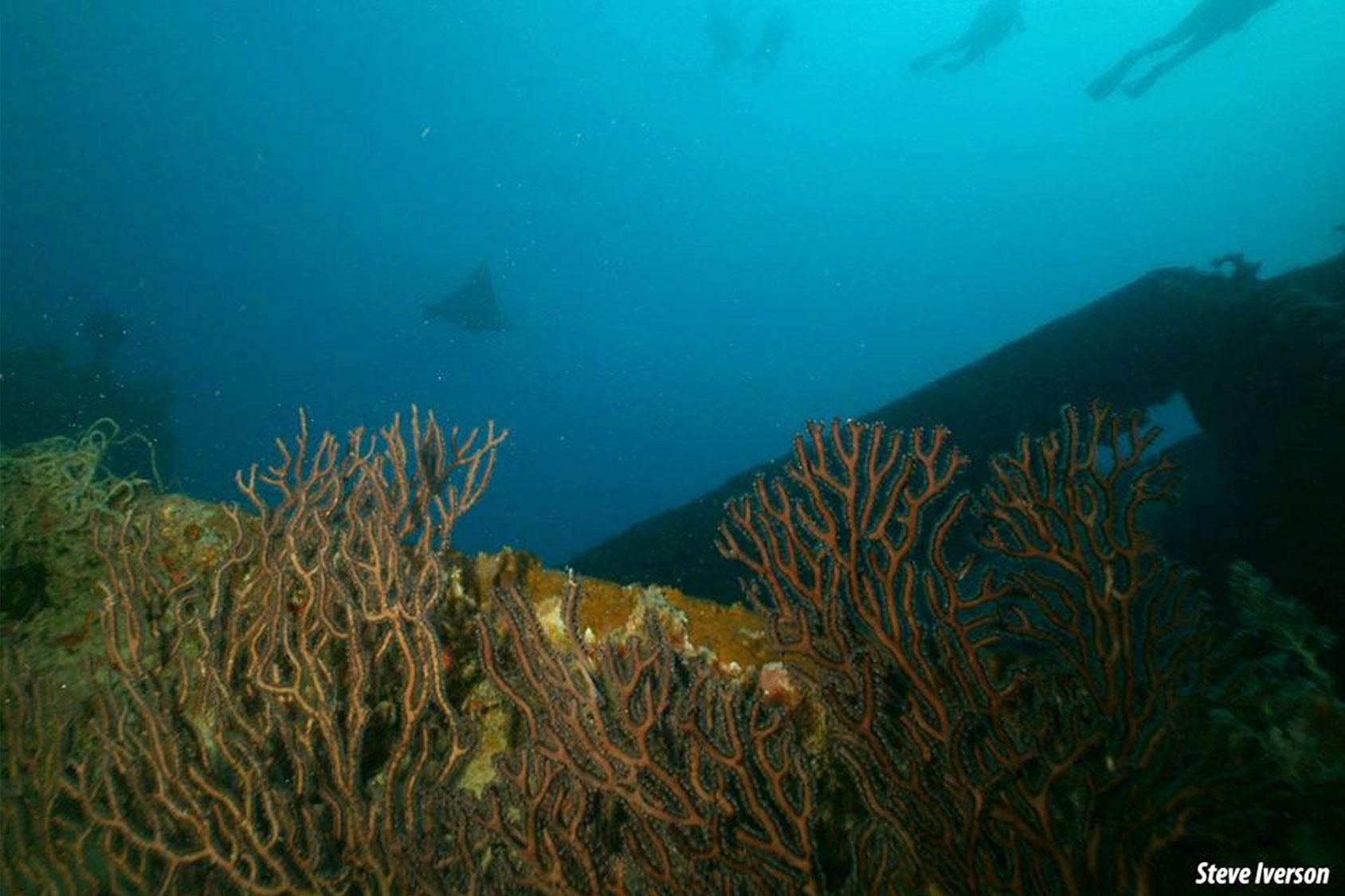 reef-dive-tours